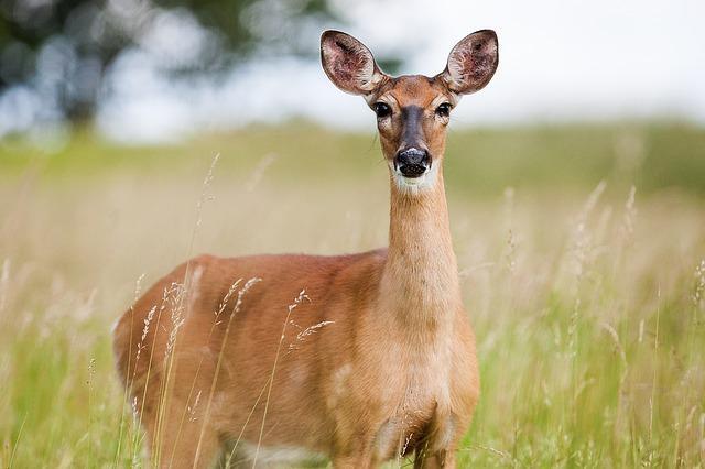 Djur och natur på Öland